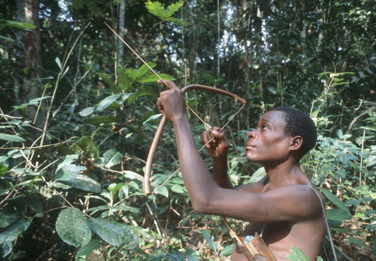 Un chasseur, muni de son arc et des flèches chasse dans la forêt au Gabon.