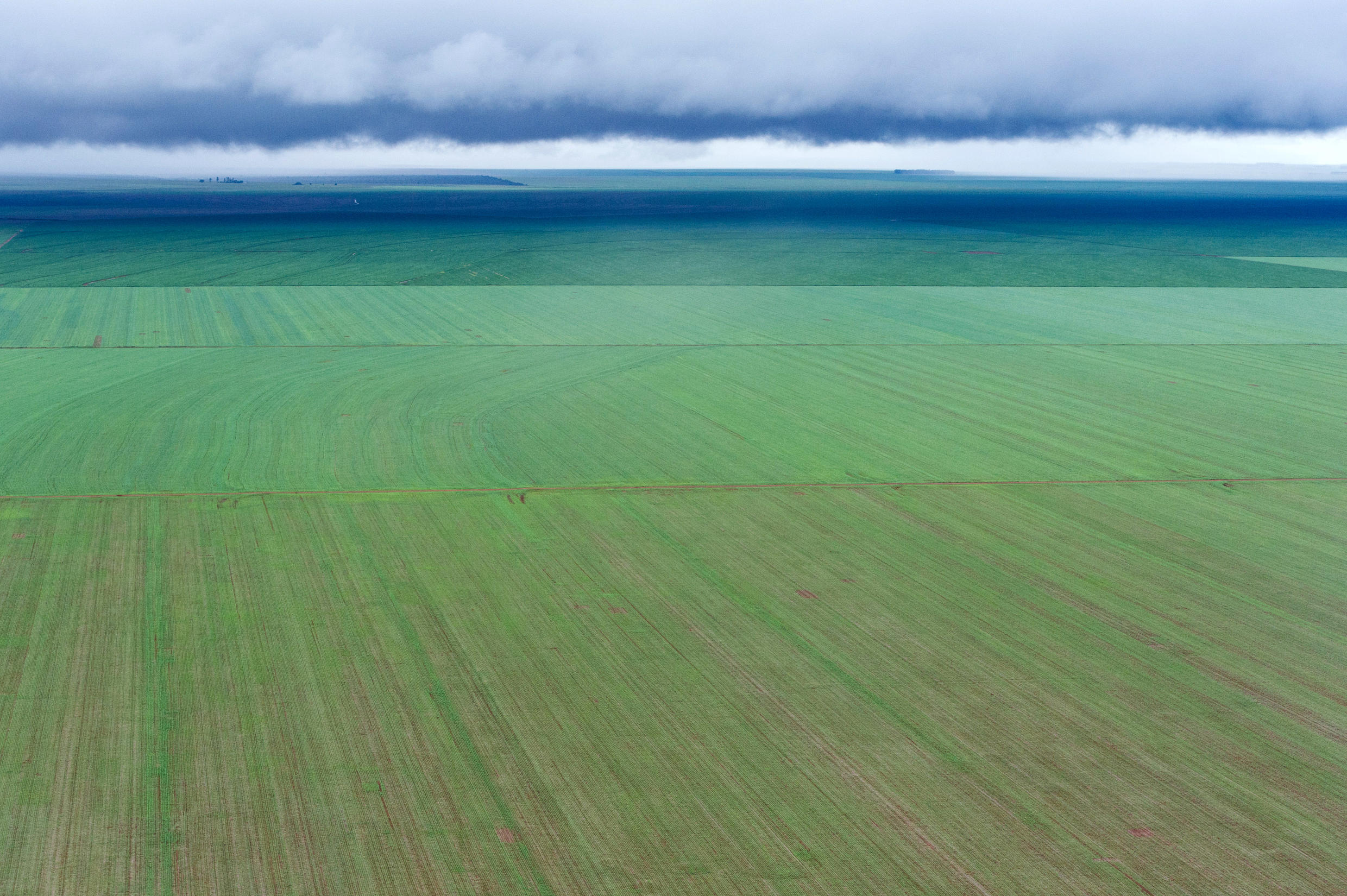 A vast soy bean field in in Campo Novo do Parecis, in Mato Grosso state, Brazil. The 'Ferrograo' is a controversial project of construction of a trans-Amazonian train in Brazil to speed up its huge grain exports.