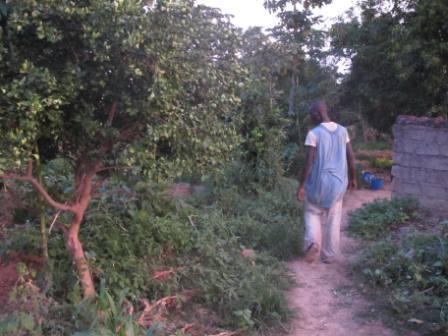 Une exploitation, au Mali, sur laquelle se succèdent les cultures tout au long de l'année.