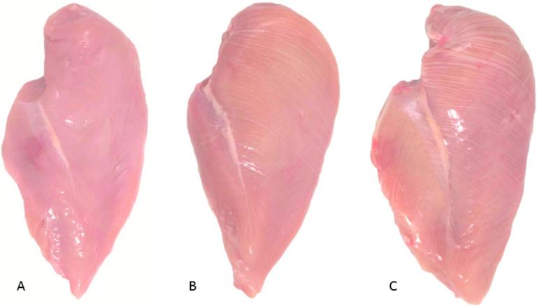 Filetes de pollo con grados crecientes de estrías blancas (white striping): normal (A), moderado (B) y severo (C).