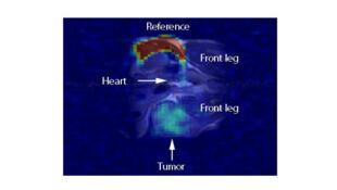 Image d'IRM d'une souris après injection de nanoparticules servant de traceurs pour détecter une tumeur.