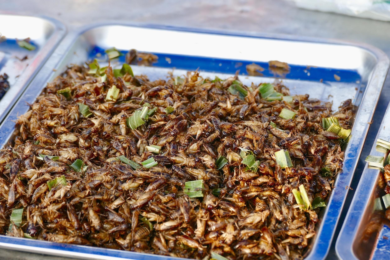 Insectes comestibles - food-3348724