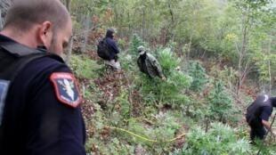 En 2016, 9000 policiers ont été déployés pour lutter contre le trafic de cannabis en Albanie. Photo : des policiers détruisent des plants de cannabis, dans l'est du pays, le 21/09/2016.
