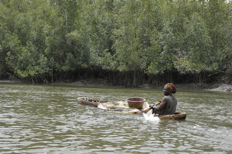 Pêcheuse d'huitres et de crevettes dans la mangrove près de Forécariah - Illustration reportage lutte contre la maladie du sommeil en Guinée