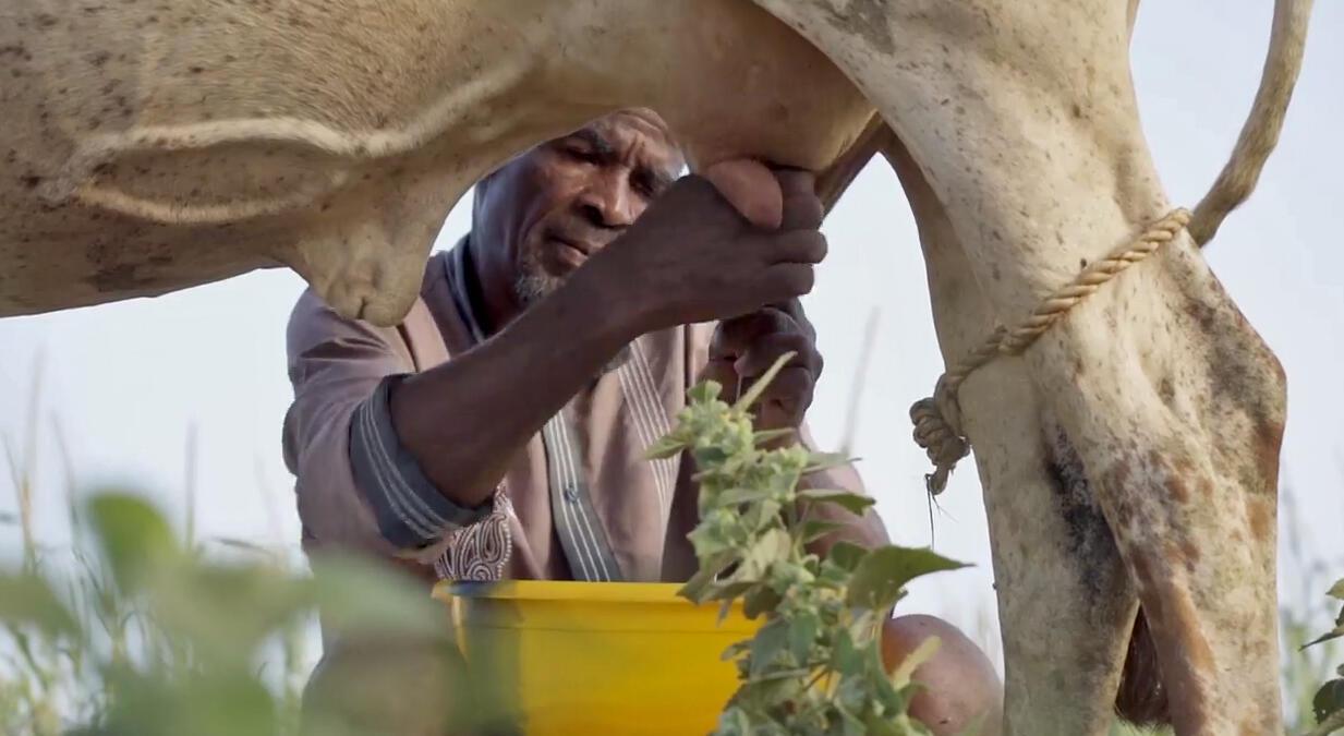 Certains États africains ont la possibilité de se protéger des importations qui mettent en péril les producteurs locaux.