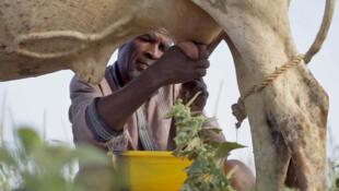 Agriculture en Afrique.