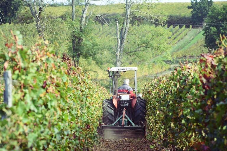 Vinhas do Chateau Fontbaude, que produz o vinho Côtes de Bordeaux Castillon, no sudoeste da França.