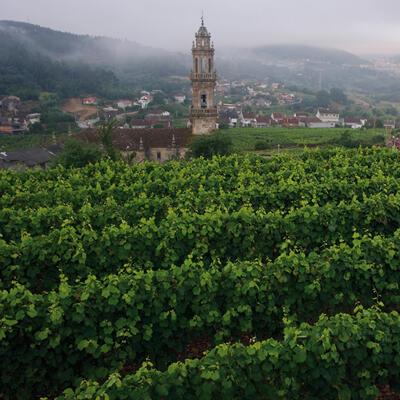 Vista de una parte de los viñedos de Pazo Tizón.