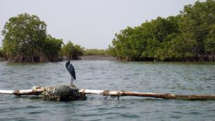 Nébéday mène régulièrement des opérations de reboisement, principalement dans la région du Saloum au Sénégal. (Photo d'illustration)