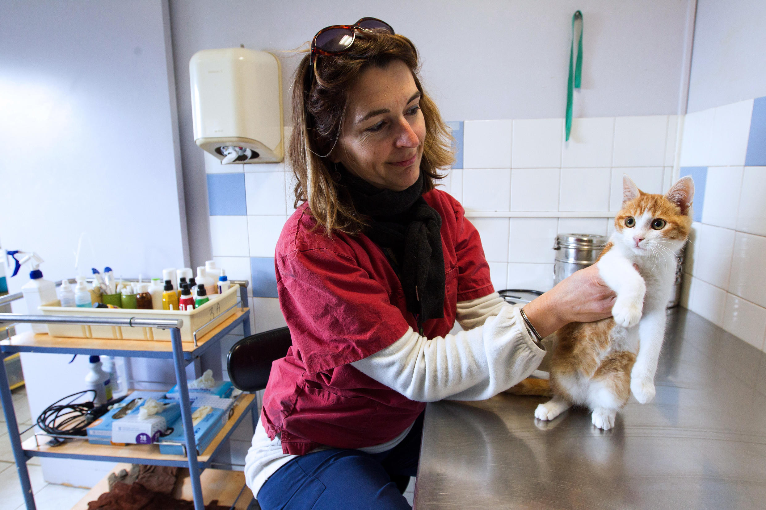 A vet at an animal shelter (SPA) in Marseille, treating a cat, Oscar, who was mistreated by his owners (illustration).