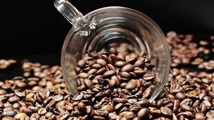 Graines de café.