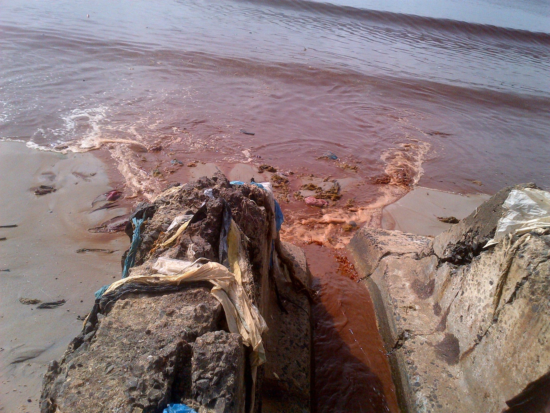 Le sang est directement reversé dans la baie de Hann.