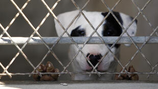 It's estimated 100,000 dogs and cats are abandonned in France each year, but the real figure could be much higher.