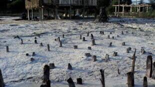 阿爾卑斯地區史前湖岸木樁遺跡