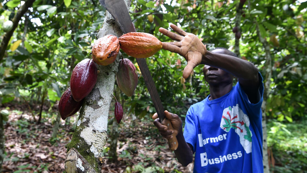 rfi.fr - African cocoa producers unleash PR offensive on chocolate giants