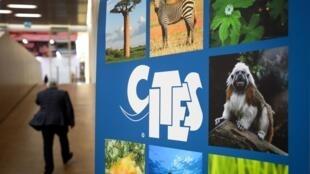 Les responsables de 180 pays se sont réunis à Genève dans le cadre de la Cites afin de tenter de renforcer les règles du commerce de l'ivoire, des cornes de rhinocéros et d'autres espèces végétales et animales menacées d'extinction.