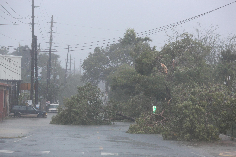 Des arbres arrachés par les rafales de vent à Fajardo, Porto Rico.