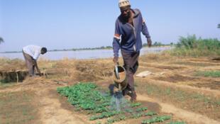 L'objectif du Papsa est d'améliorer la capacité des producteurs à accroître les productions vivrières et à assurer la disponibilité de ces produits sur le marché toute l'année.