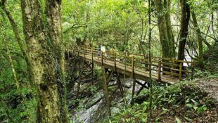 Petit pont dans la forêt de bambou du village de Smangus, où vivent les aborigènes Atayals àTaiwan.