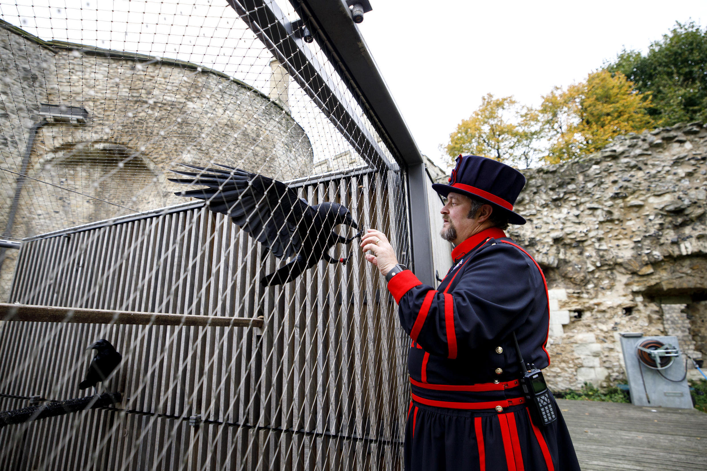 Yeoman Warder Ravenmaster Chris Skaife poses with a raven at the Tower of London in central London in October last year.