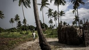 A boy from the village of Quitupo walks past palm trees in Palma on February 16, 2017. The village of Quitupo will be resettled to make way for the new gas mining project in and around the district of Palma.