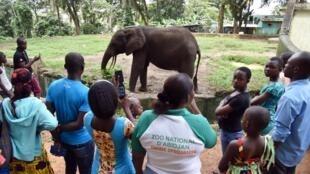 Un éléphant sous les yeux des visiteurs au zoo d'Abidjan, le 24 juillet 2015.