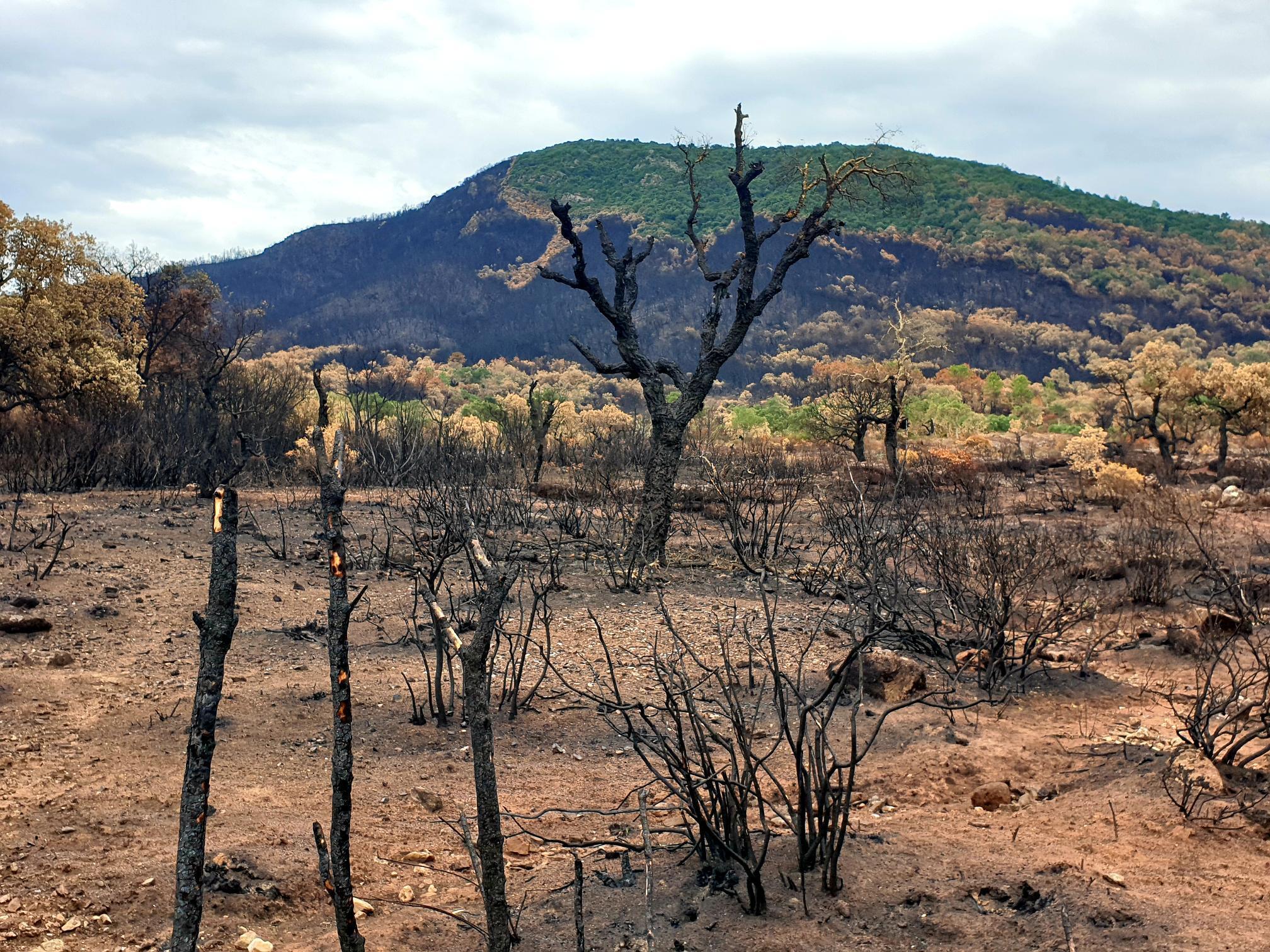 Dans la Plaine des Maures, ou ce qu'il en reste, après le passage des flammes. RFI/F. GUIGNARD