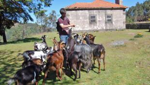 Hugo Novo, éleveur de chèvres, doit composer avec la présence de loups dans le parc de Peneda-Gerês.