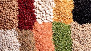 L'Inde est le destinataire de la moitié du commerce mondial de légumes secs, ils sont la base de l'alimentation au Pakistan et au Bangladesh.