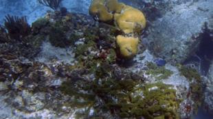 L'éponge marine partage de nombreux gènes avec l'Homme.