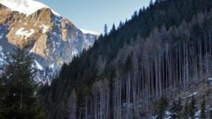 Des forêts victimes de déboisement illégal dans la vallée de Pojarna dans les Carpathes.