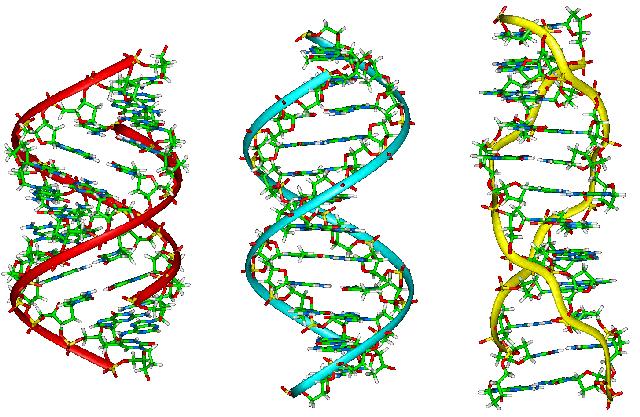 存档图片:基因 Image d'archive: ADN