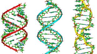 Cấu trúc ADN