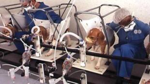 Em março, a União Europeia proibiu que cosméticos testados em animais sejam vendidos no bloco.