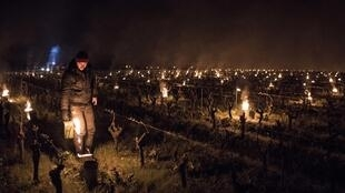 A winegrower from the Luneau-Papin wine estate lights anti-frost candles in the vineyard in Le Landreau, near Nantes, western France, on April 12, 2021, as temperatures fall below zero degrees celsius.