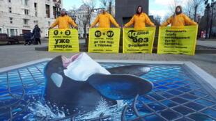 綠色和平組織成員在莫斯科抗議俄羅斯公司非法捕捉鯨魚出售給中國遊樂園,2019年4月2日。