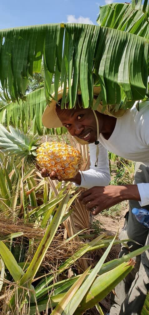 Kam Rigne Laossi cultive des ananas au Tchad.