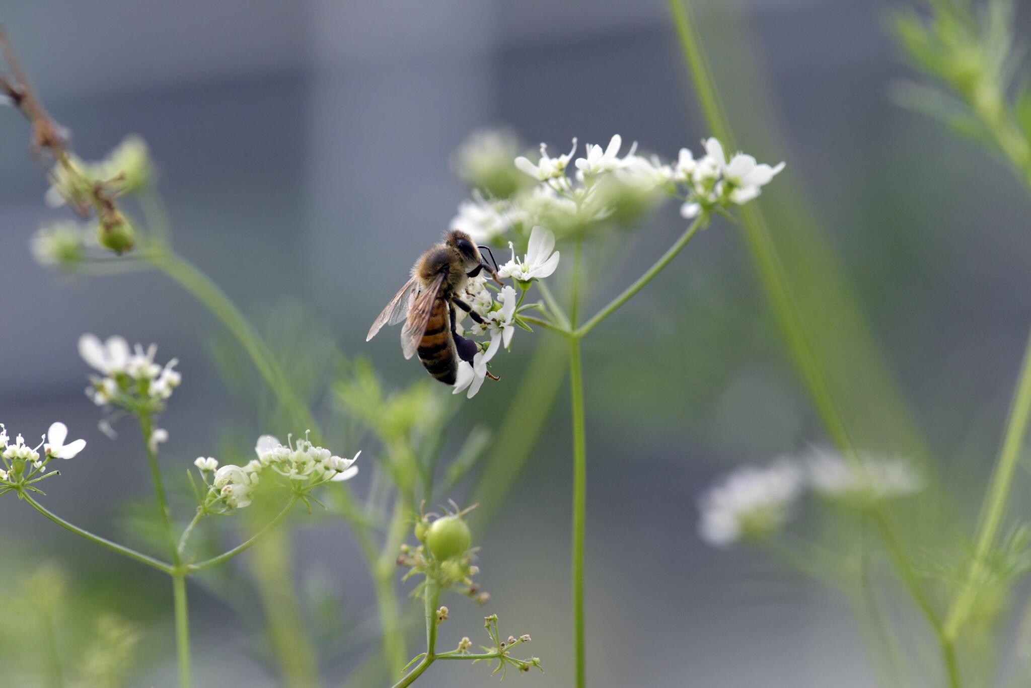 Ảnh minh họa: Nhiều loài côn trùng cũng có nguy cơ bị biến mất do tình trạng lạm dụng thuốc trừ sâu.