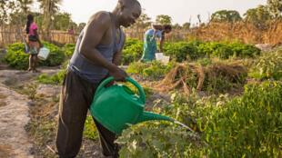 Aidé par les habitants du village de Bofa Bayotte, Guy-Bernard Ndiamy se consacre tous les jours à son «jardin», un maraîchage qu'il a créé en 2018.