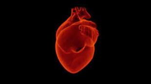 D'après l'OMS, les maladies cardiovasculaires sont la première cause de mortalité dans le monde.