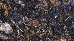 Des déchets organiques domestiques dégradés et transformés en compost.