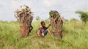Une scène de la vie quotidienne à Mbandaka (paniers de transport du bois domestique), dans la province de l'Equateur, en RD Congo.