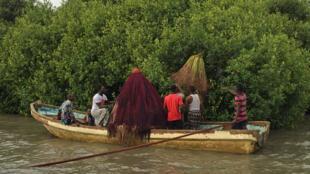 la sacralisation de mangroves avec des divinités vaudou pour en interdire l'accès et donc les protéger.