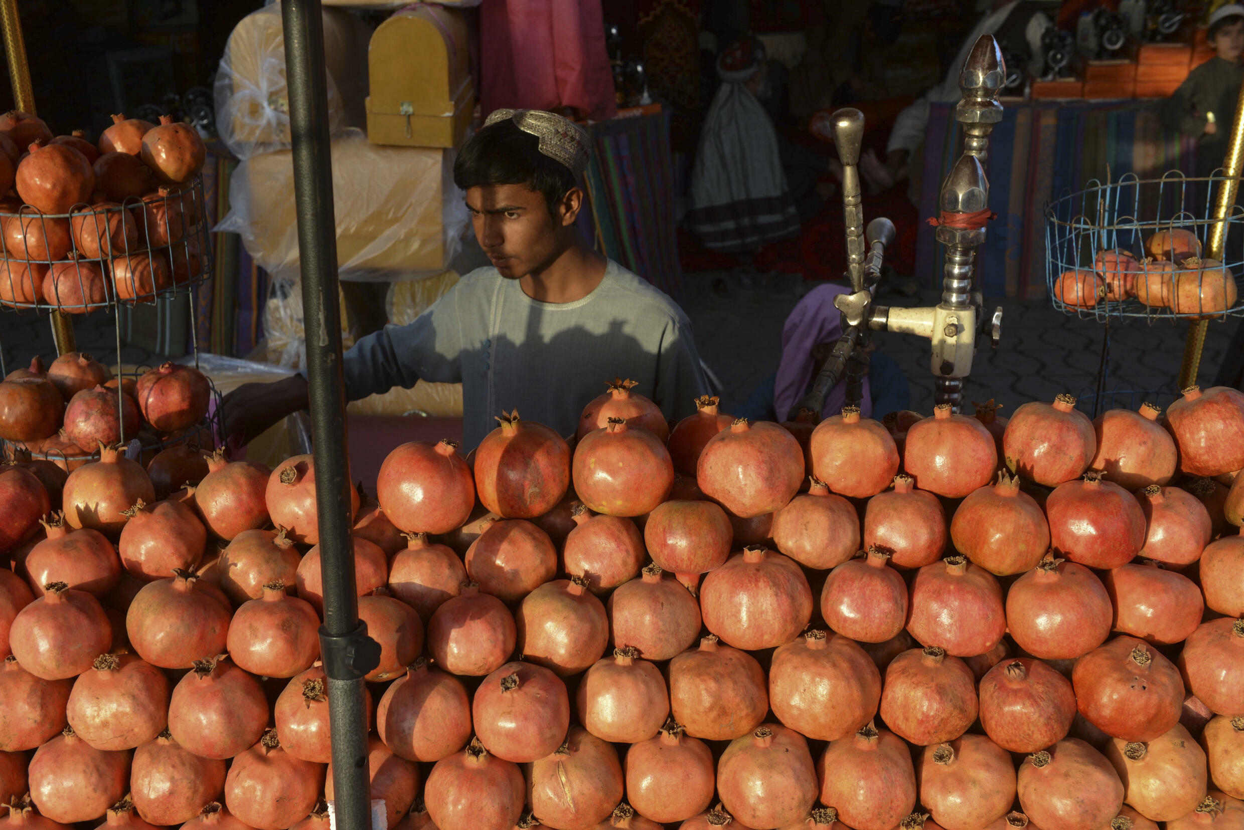 Pomegranate is one of the most important crops in southern Afghanistan