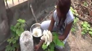 Les champignons sont produits à partir d'un procédé dont seul Tsengué-Tsengué détient le secret.