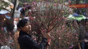 En ce Têt, les temps sont durs pour les marchands de fleurs de Hanoï. (Photo: marché aux fleurs de Hanoï, 7 février 2013).