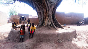 A Sinsina, le conseil des sages se tient sous l'arbre à palabre.