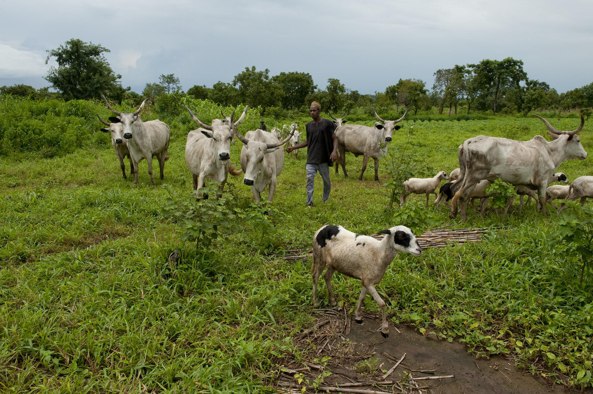 Nigeria - paturage - éleveurs - État de Niger