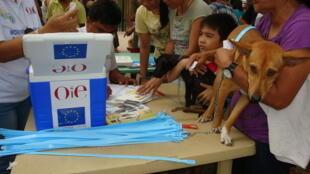 Campagne de vaccination nationale des chiens contre la rage, au Laos, en septembre 2012.