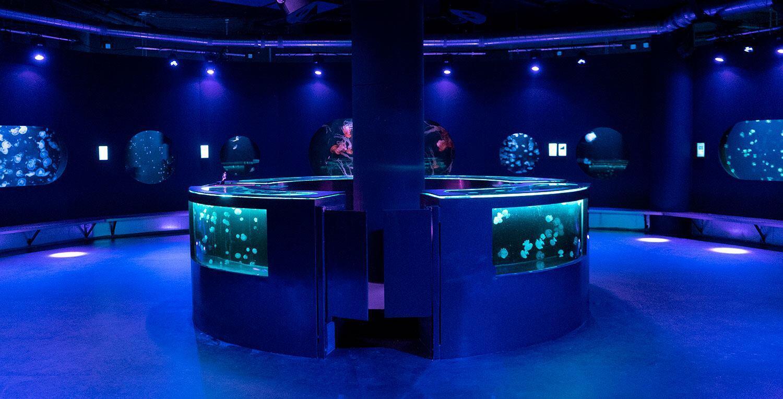 Sala principal del medusario.